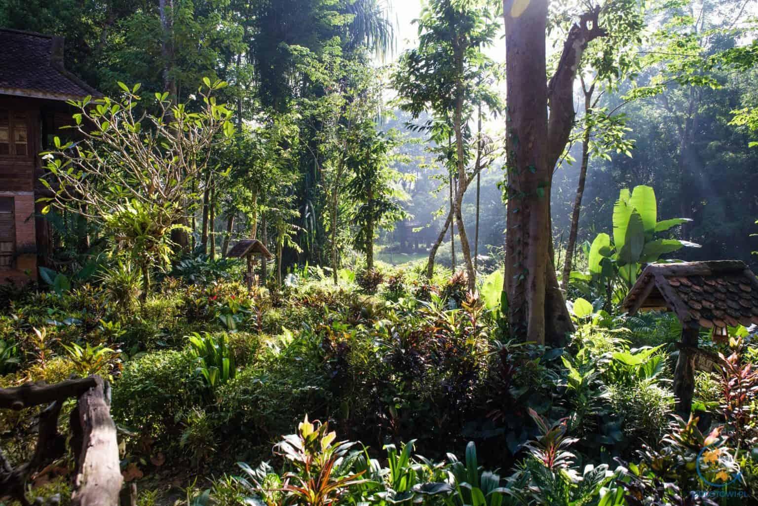 Widok z domku na dżunglę i rzekę w Khao Sok.